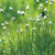 back_spring fresh_s